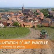 Plantation d'une parcelle