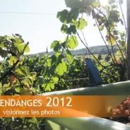 Vendanges 2012